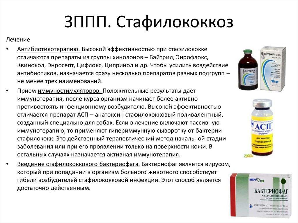 Стафилококк золотистый ауреус - симптомы у взрослого и ребенка, фото в горле и зеве