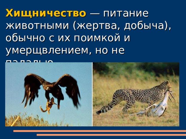 Хищничество. значение хищничества в природе.