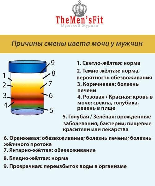 Состав мочи человека (химический): что он определяет, таблица нормы