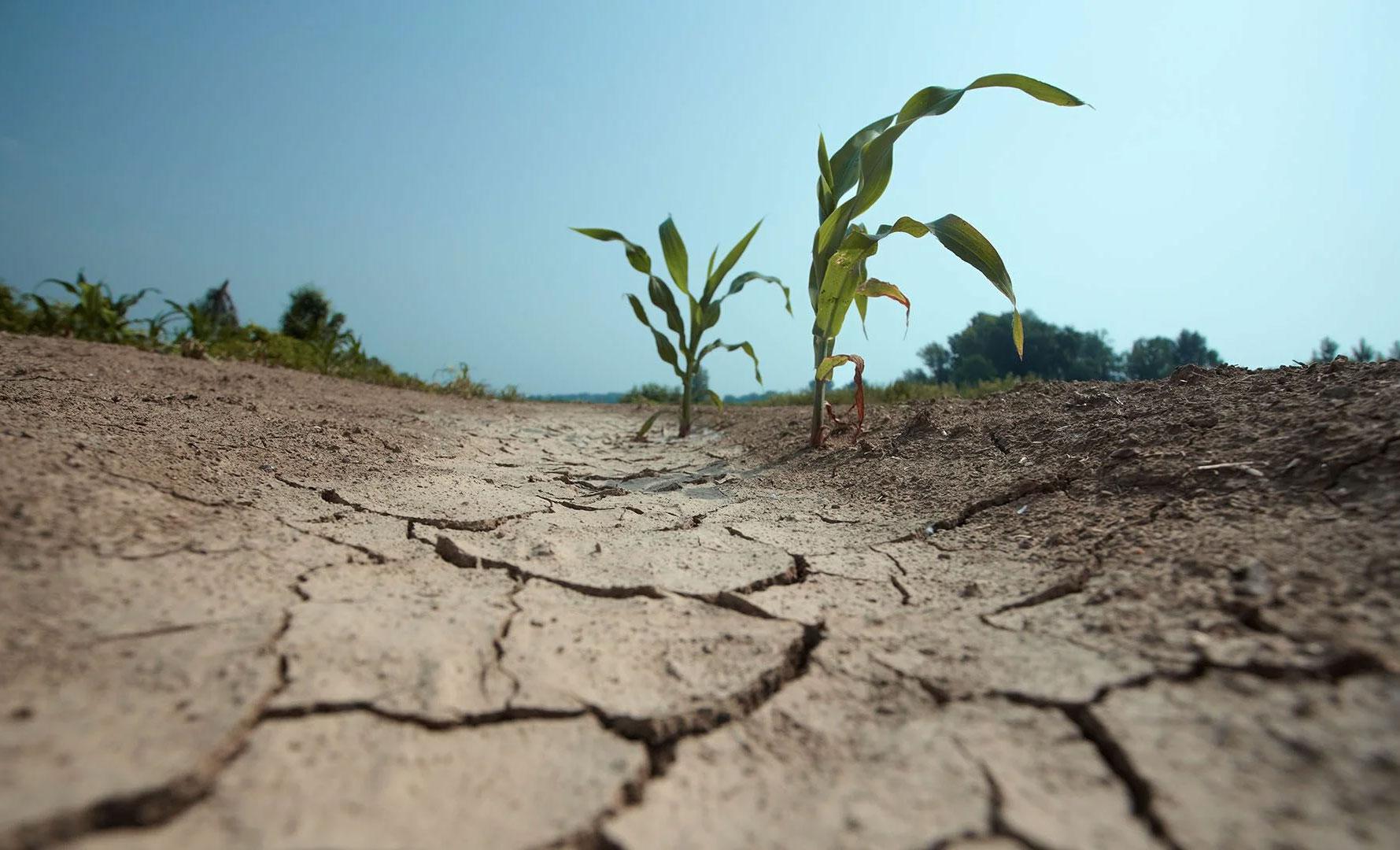 Обзор: проблема опустынивания на глобальном и региональном уровнях