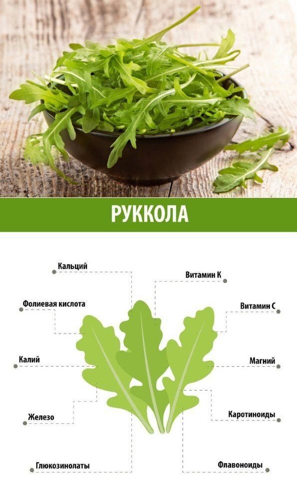 Руккола: польза и вред для здоровья женщин и мужчин, как выглядит и растет трава, противопоказания, калорийность, вкус, с чем едят индау и как убрать горечь