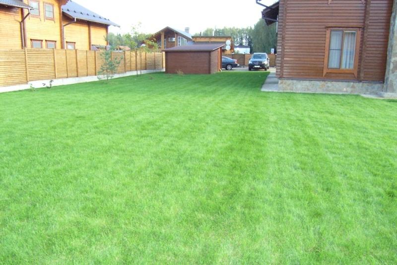 7 болезней придомового газона (и как спасти лужайку минимальными усилиями)