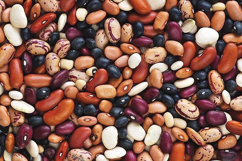 Как выбрать и вырастить фасоль – все о сортах и агротехнике | на грядке (огород.ru)
