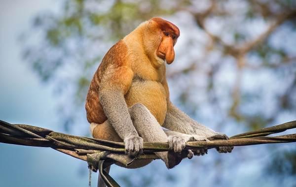 От кого произошли обезьяны: основные теории, интересные факты