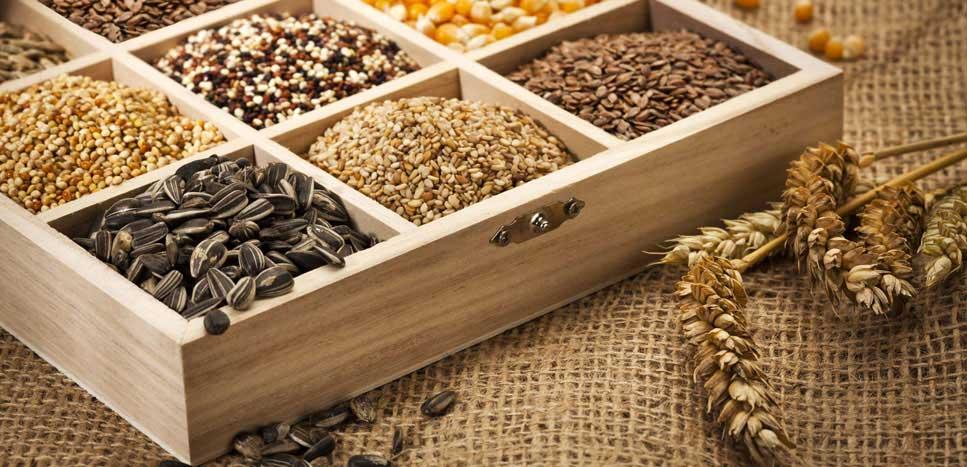 Стратификация семян в домашних условиях и техника ее проведения