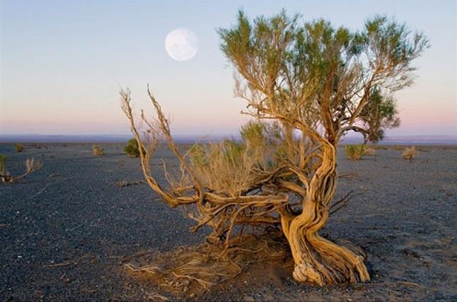 Древесный бизнес - все о дереве, изделия из дерева - саксаул
