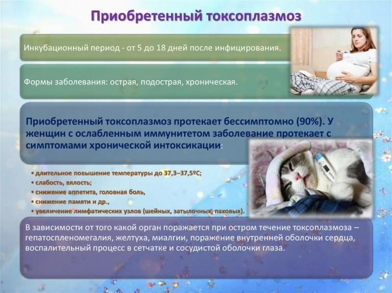 Токсоплазмоз (токсоплазма) - симптомы и лечение. журнал медикал