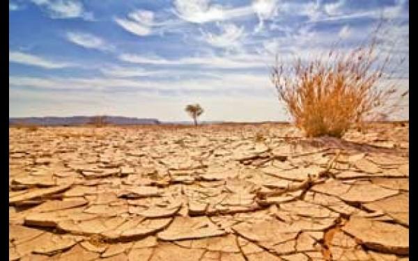 Опустынивание земель: причины и методы борьбы