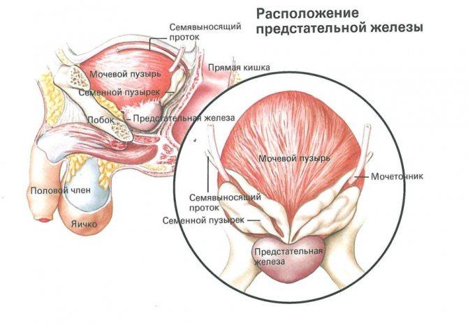 Мужской недуг: гиперплазия предстательной железы и эффективные методы её лечения