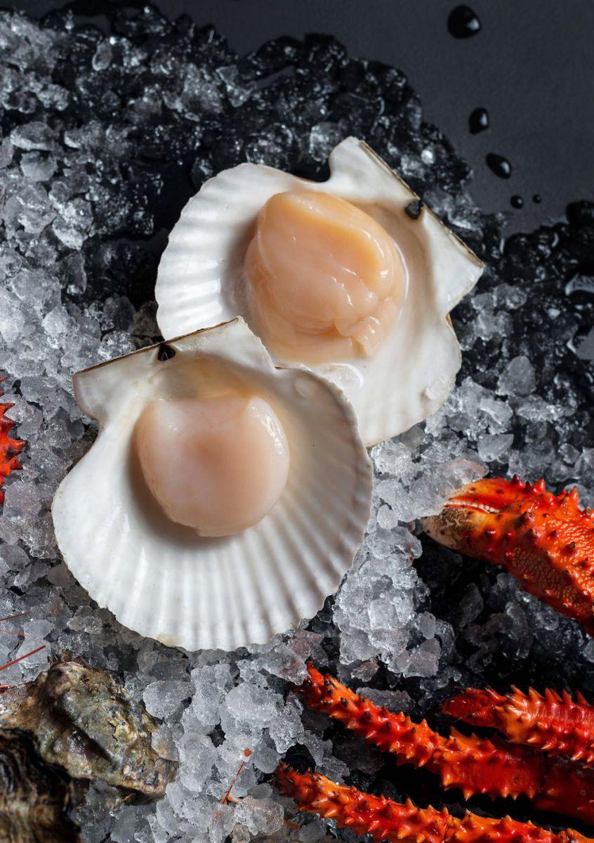 Морские гребешки - полезные и опасные свойства морских гребешков