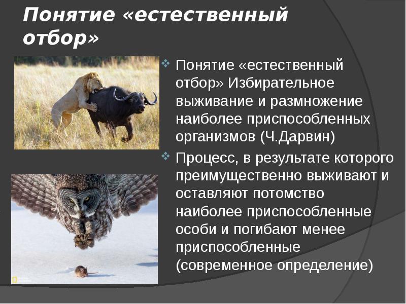 Естественный отбор: биологическое значение, источники, классификация