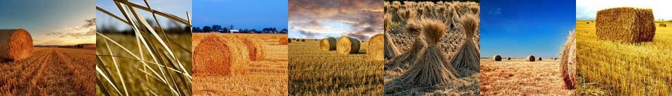 Чем отличается сено от соломы: описание в двух словах с фото