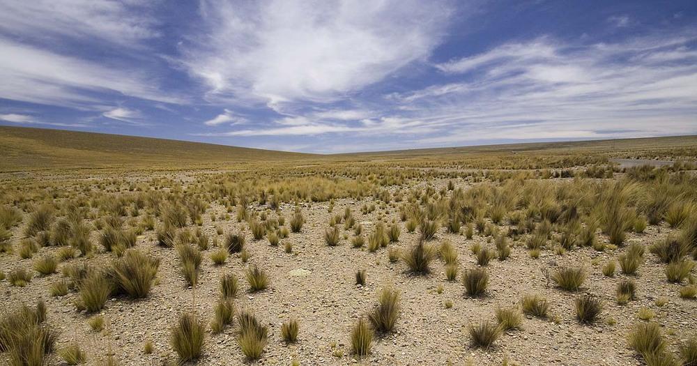 Что такое пампа южной америки?