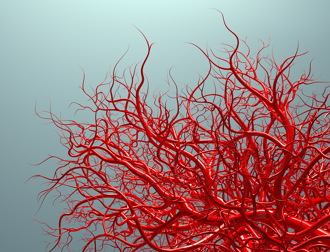 Что такое капилляры — строение и виды сосудов, их функции, патологии
