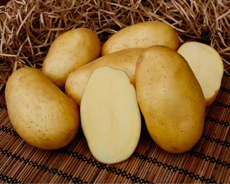 Блюда из картошки: 20 простых рецептов на каждый день | дачная кухня (огород.ru)