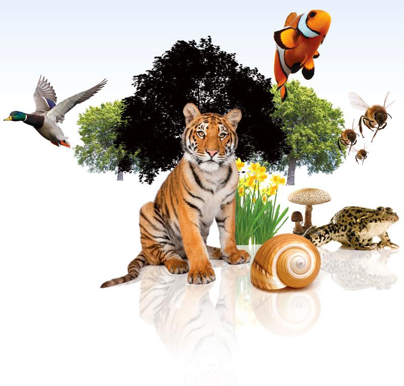 Биологическое разнообразие википедия