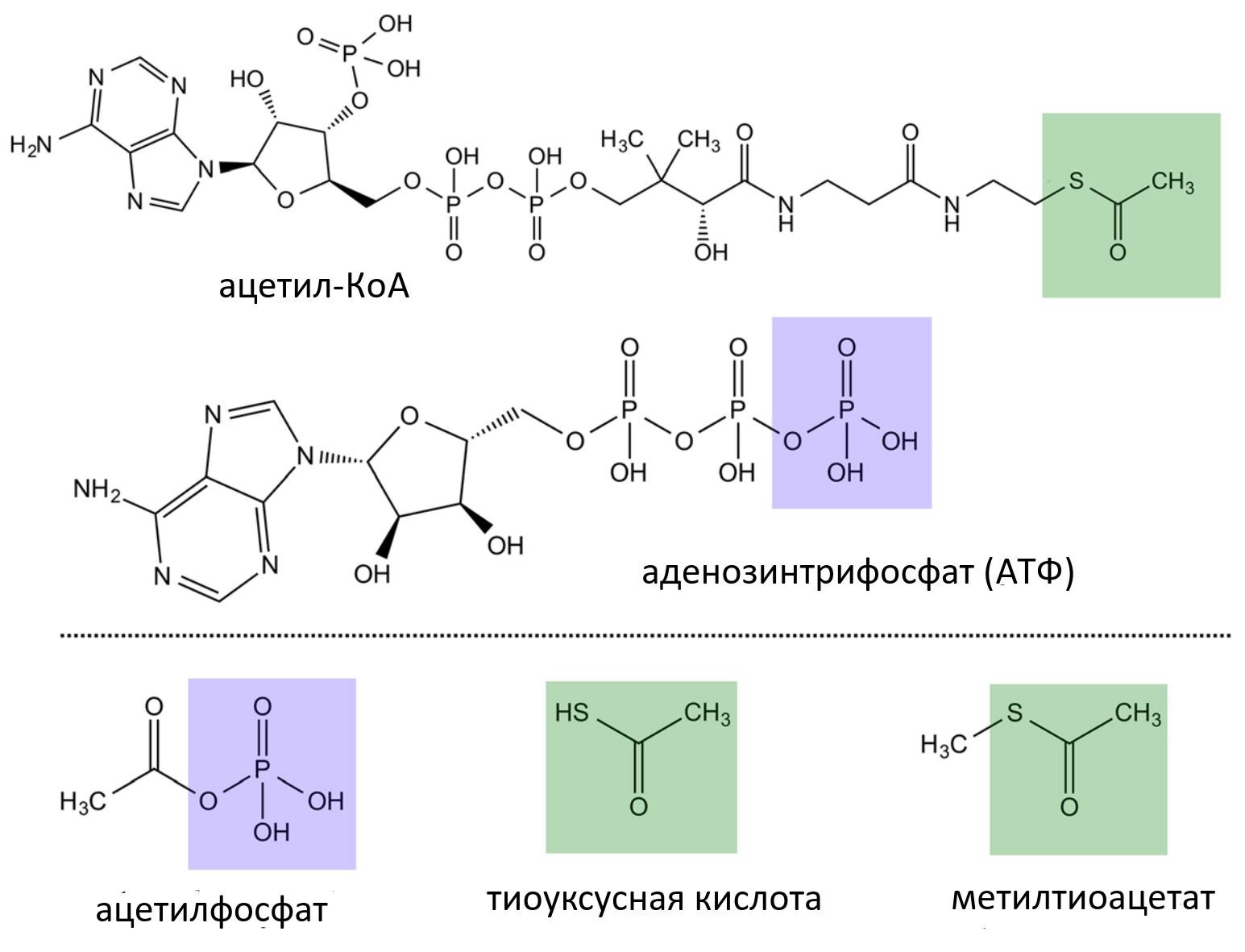 Происхождение и свойства протобионтов / биология | thpanorama - сделайте себя лучше уже сегодня!