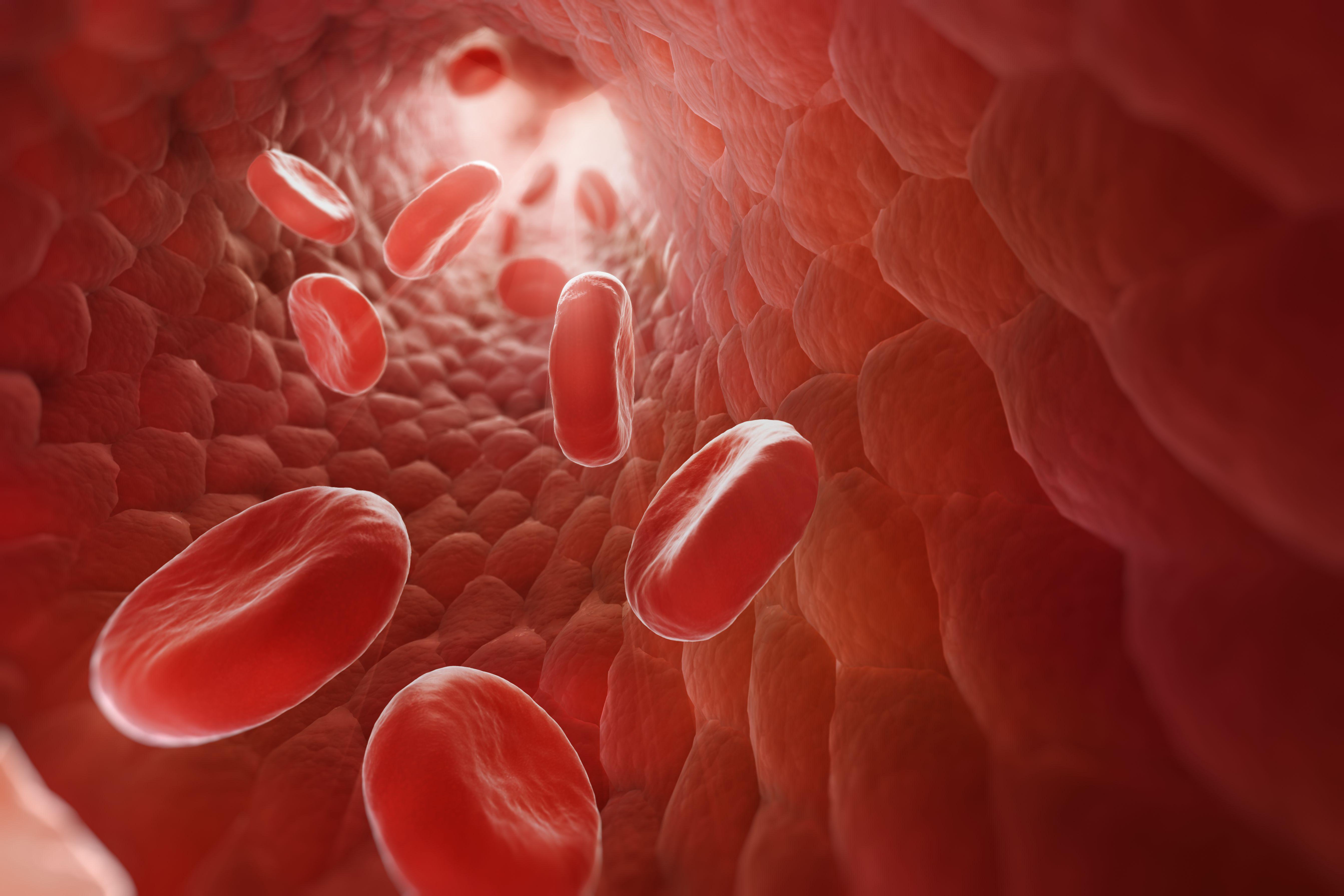 Эритроциты в крови: нормы, функции, строение, где образуются