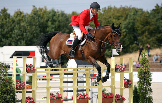 Конкур на лошадях. история и виды соревнований