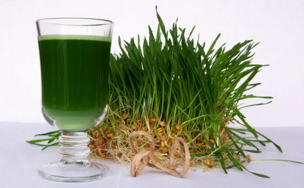 Как приготовить и употреблять витграсс – сок из ростков пшеницы