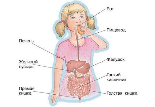 Острый энтерит: симптомы и лечение, причины, диагностика