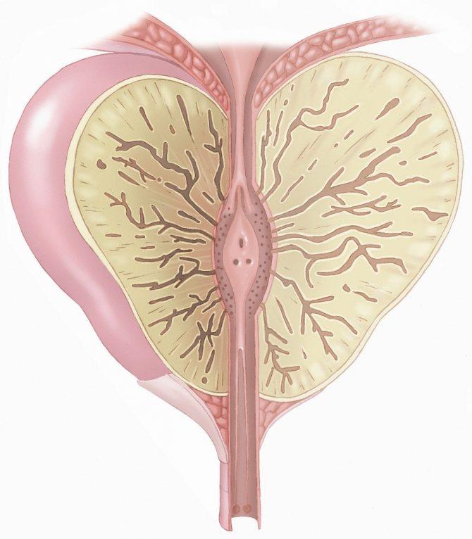 Хронический простатит и аденома предстательной железы: причины появления, симптомы, лечение