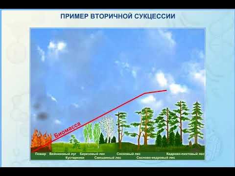 Экологическая сукцессия. реферат. экология. 2013-10-03