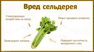 Сельдерей - полезные и вредные свойства, зачем кушать сельдерей