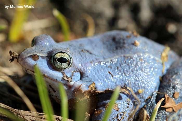 Жаба давит: какие лягушки вызывают галлюцинации и дерутся, как супергерои