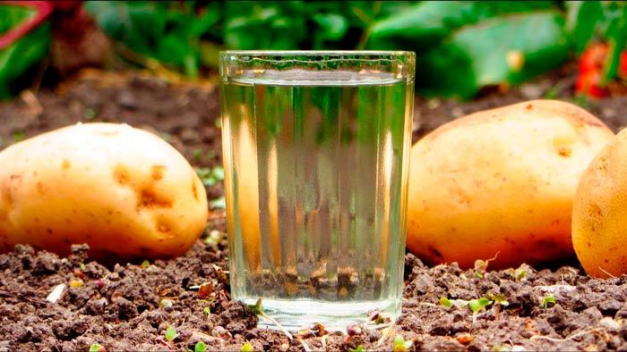 Шнапс — вкусный немецкий самогон: рецепты шнапса из яблок, груш и персиков.