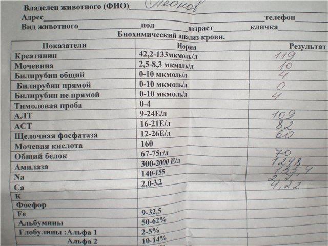 Норма алт и аст в крови, анализы и расшифровка