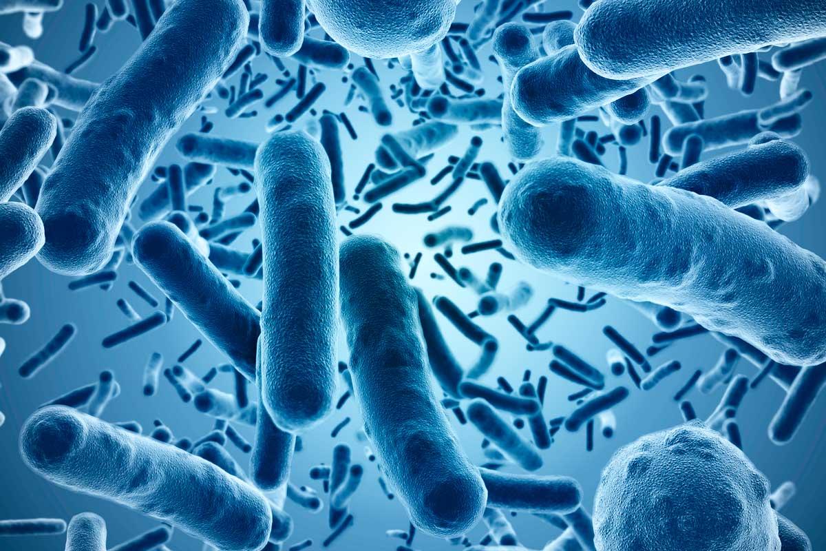 Инфекционные заболевания: список, симптомы, лечение, профилактика