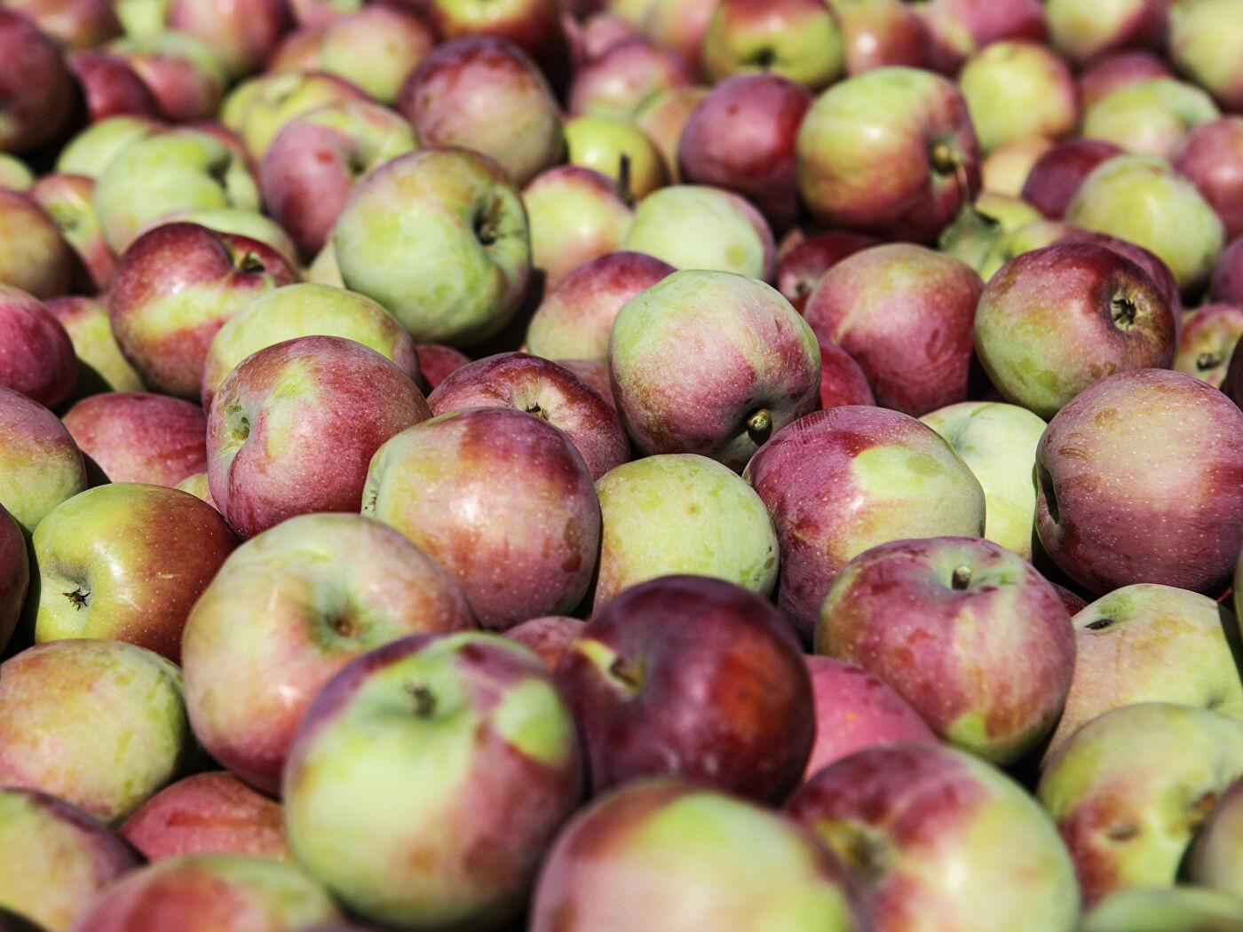 Яблоки википедия
