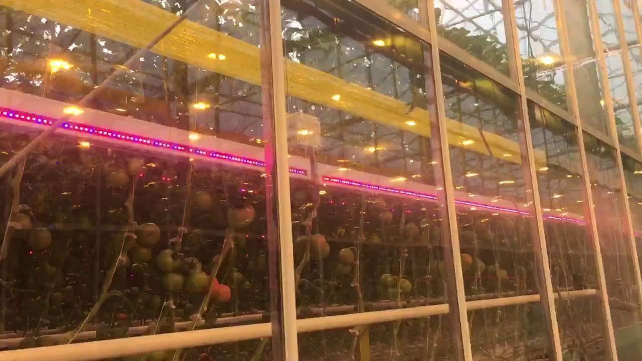 Как выбрать балласт для люминесцентных ламп — устройство, как работает, виды