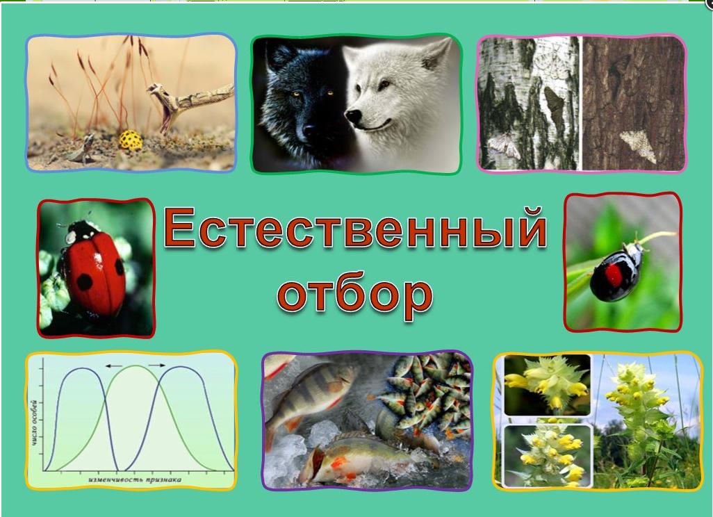 """Конспект """"естественный отбор. искусственный отбор"""" - учительpro"""