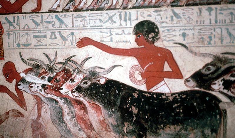 Роль шадуфов в жизни земледельцев древнего египта