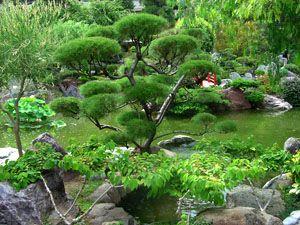 Что такое дендрологические парки и ботанические сады : labuda.blog что такое дендрологические парки и ботанические сады — «лабуда» информационно-развлекательный интернет журнал