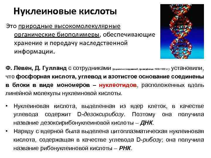 Нуклеиновые кислоты – строение, виды структуры (химия, 10 класс)