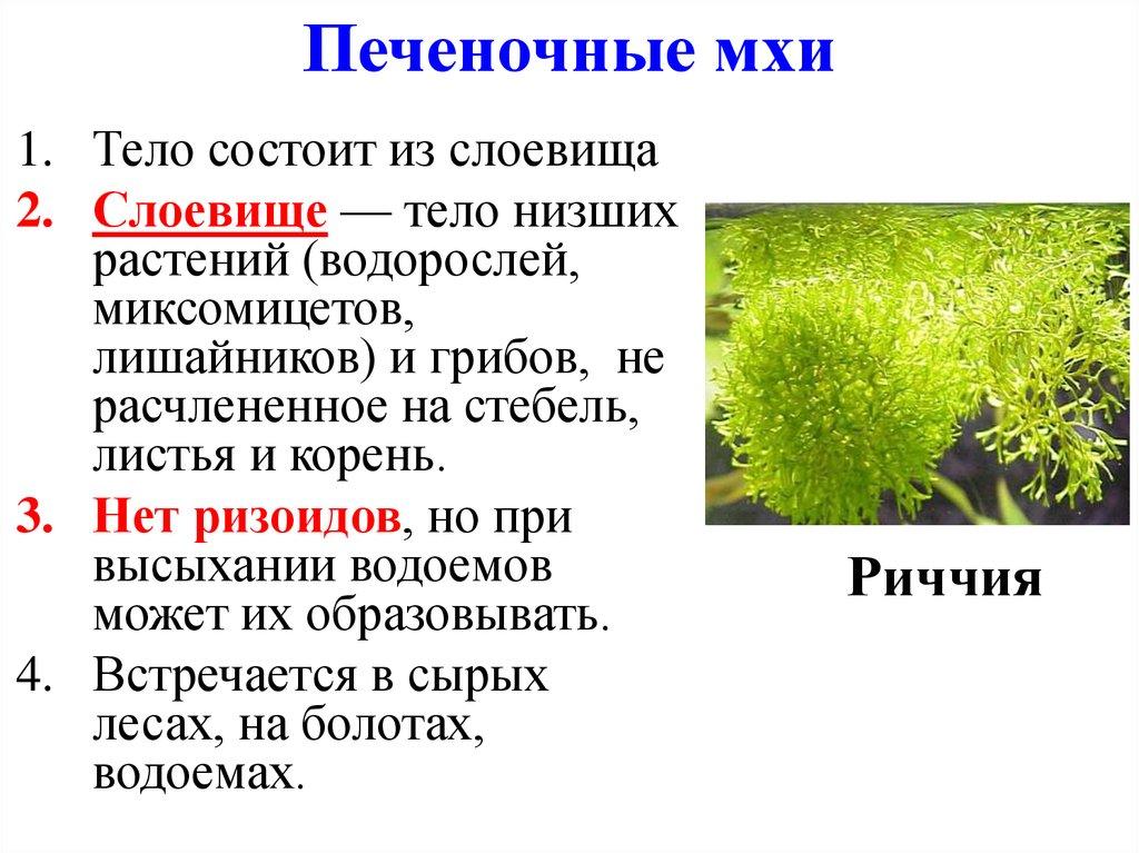Мхи — википедия с видео // wiki 2