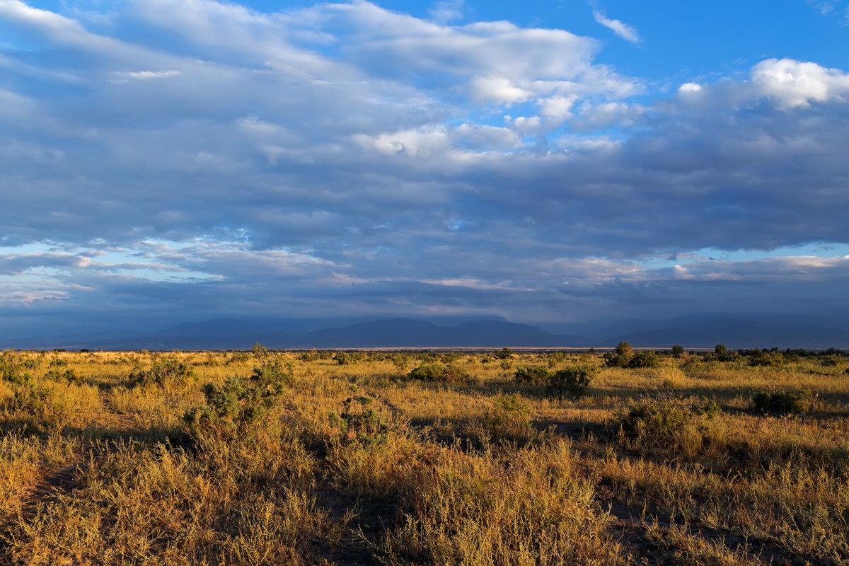 Зона степей россии: расположение, карта, природные условия, животные и растения