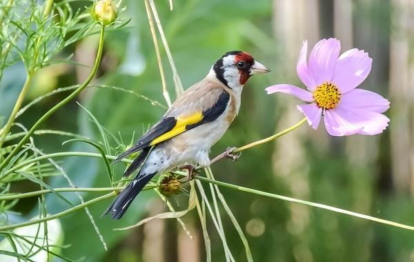 «пернатый» ликбез. что важно знать о птицах, которые живут в городе | общество | аиф рязань