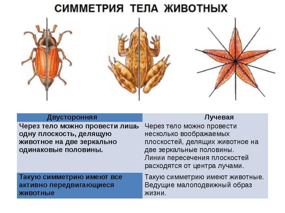 Симметрия — википедия