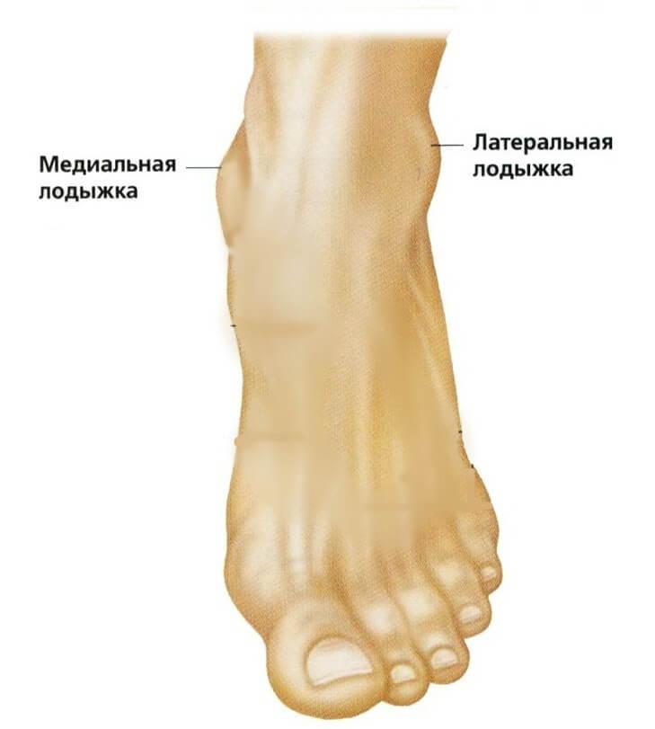 Анатомия и патологии голени человека