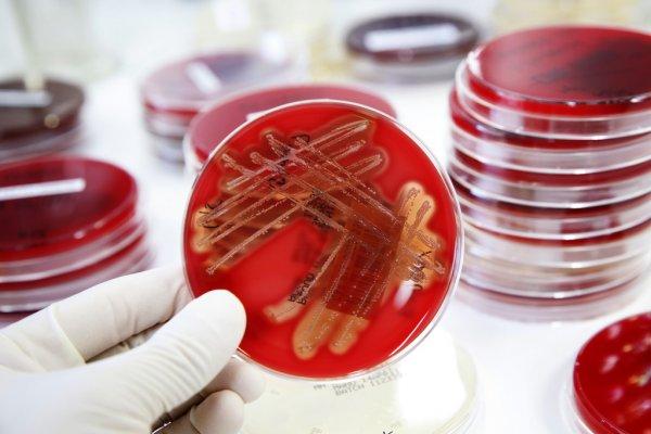 Значение микробиологии
