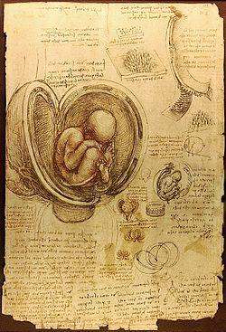 Беременность день за днём, неделя за неделей. как развивается эмбрион