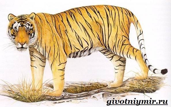 Черная книга вымерших животных: список исчезнувших видов, фото