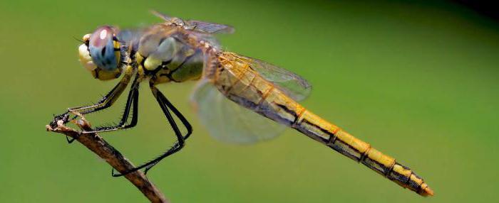 Экологическая ниша — википедия. что такое экологическая ниша
