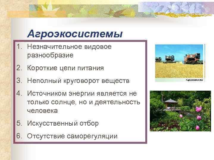 Биоценоз, биогеоценоз, экосистема