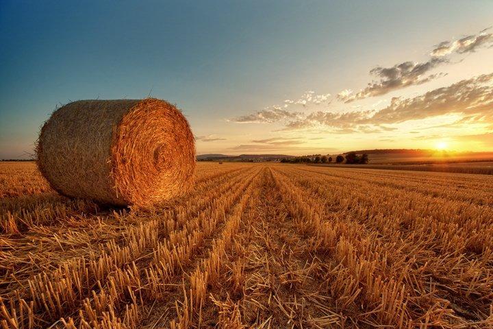 Чем отличается сено от соломы