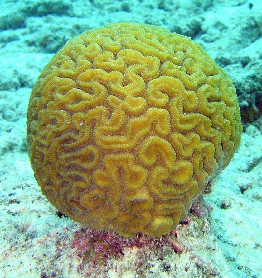Камень коралл: описание с фото, свойство и значение для человека, совместимость со знаками зодиака